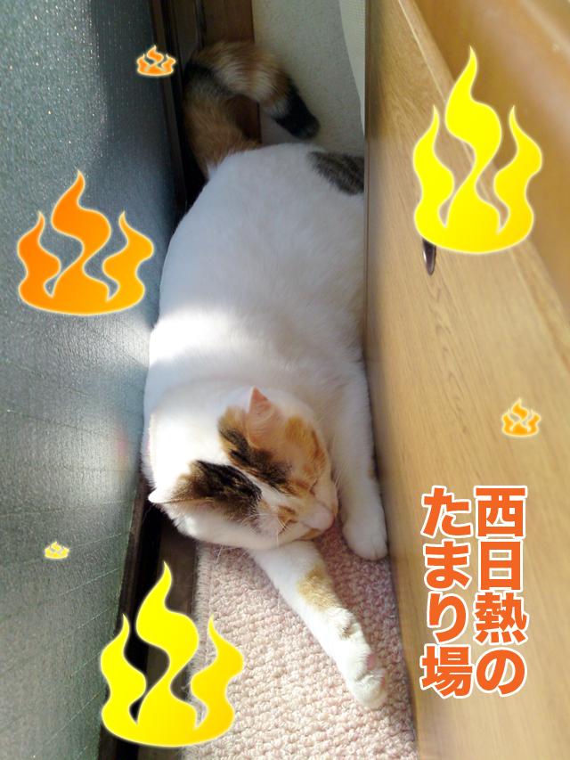 Nishibi_1