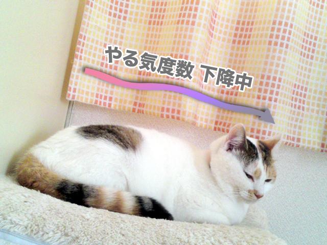Taifu_1