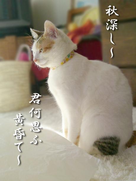 Youkyu_1_2