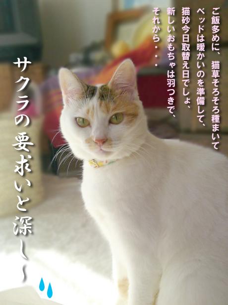 Youkyu_2
