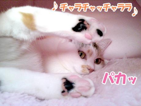 Choina_4