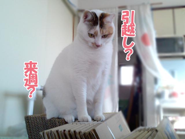 Hikkoshi_2