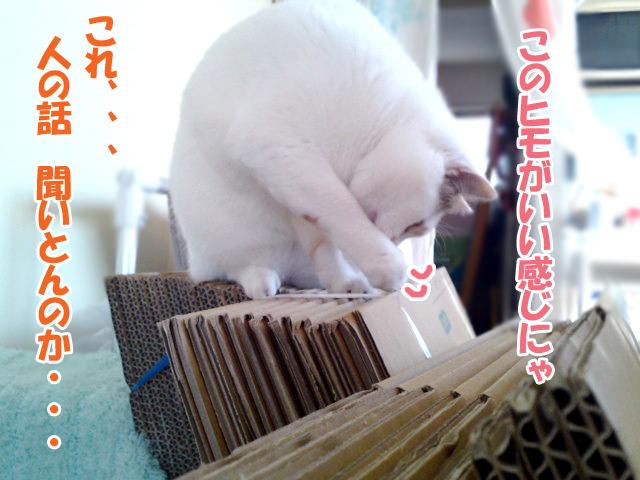Hikkoshi_3