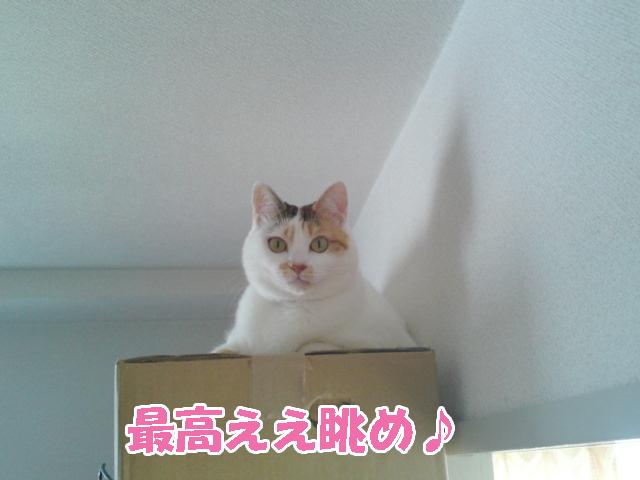 Shinkyo_1