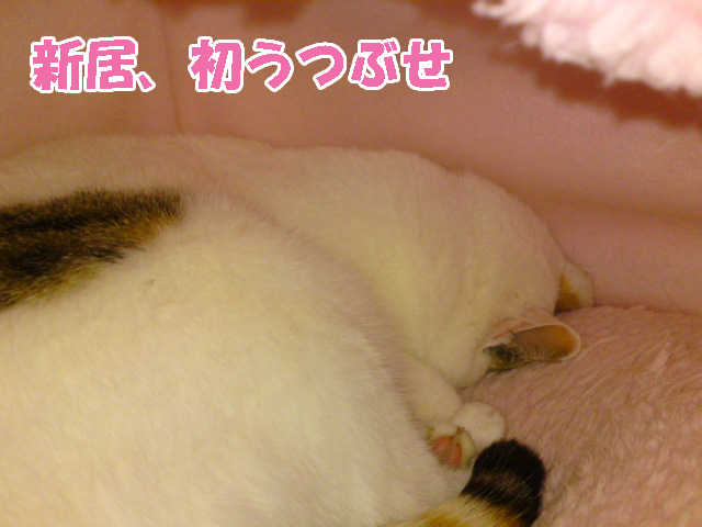 Shinkyo_3