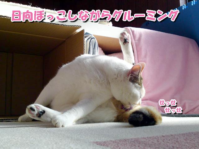 Igokochi_2