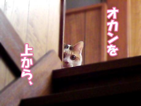Mikudashi_2