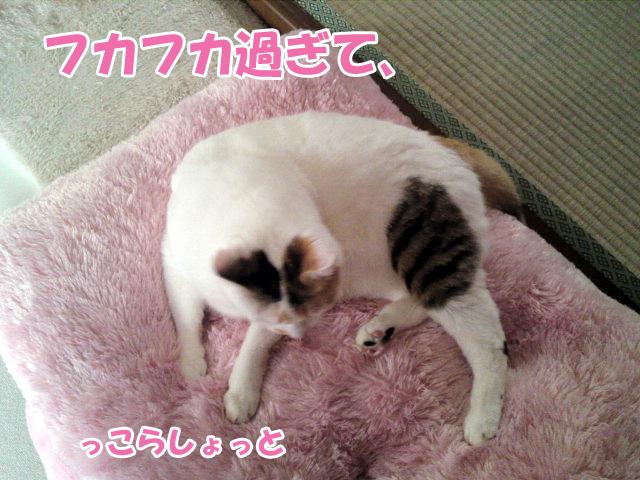Fukafuka_2