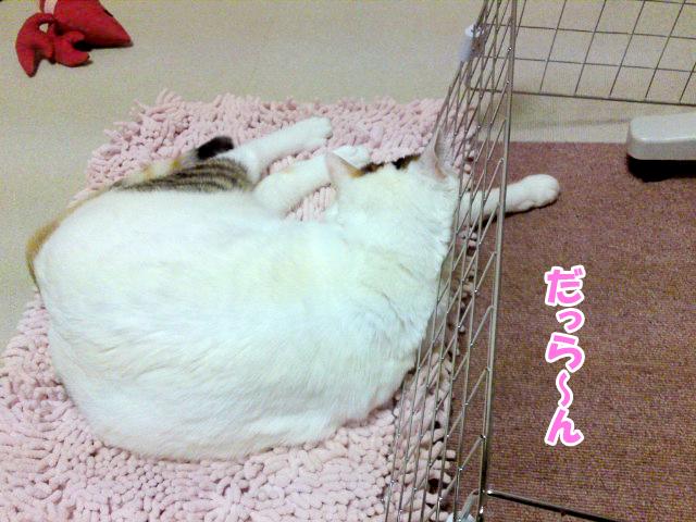 Wasawasa_1