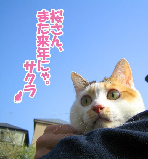 Ohanami_8