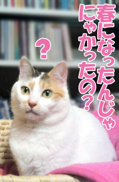 Sukashi_1