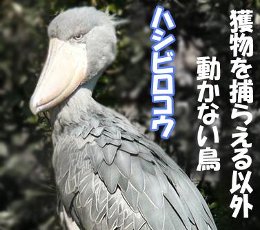 Rex_1