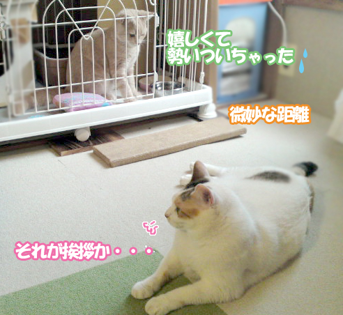 Hatsu_3