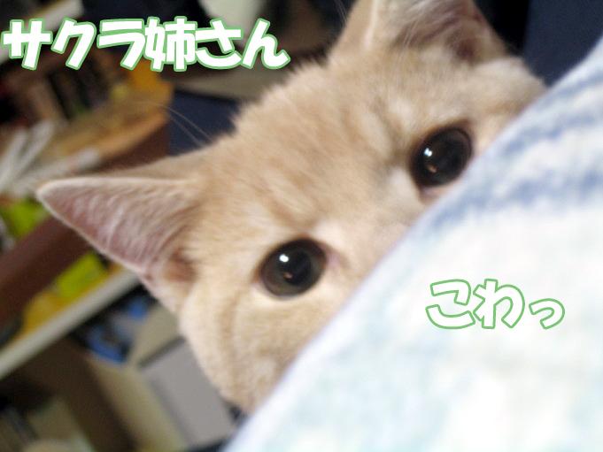 Hatsu_7