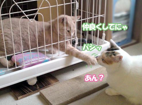 Hatsu_8