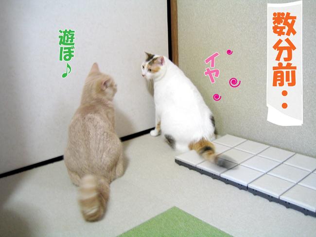 Kyori_3