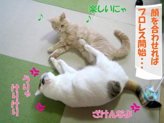 Kyori_5